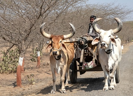 transport indien